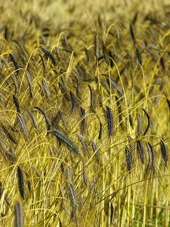 21 céréales miraculeuses pour votre bien-être